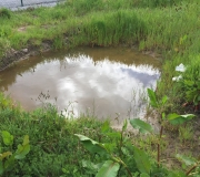 Pool-inside-duck-section-of-pen.-1